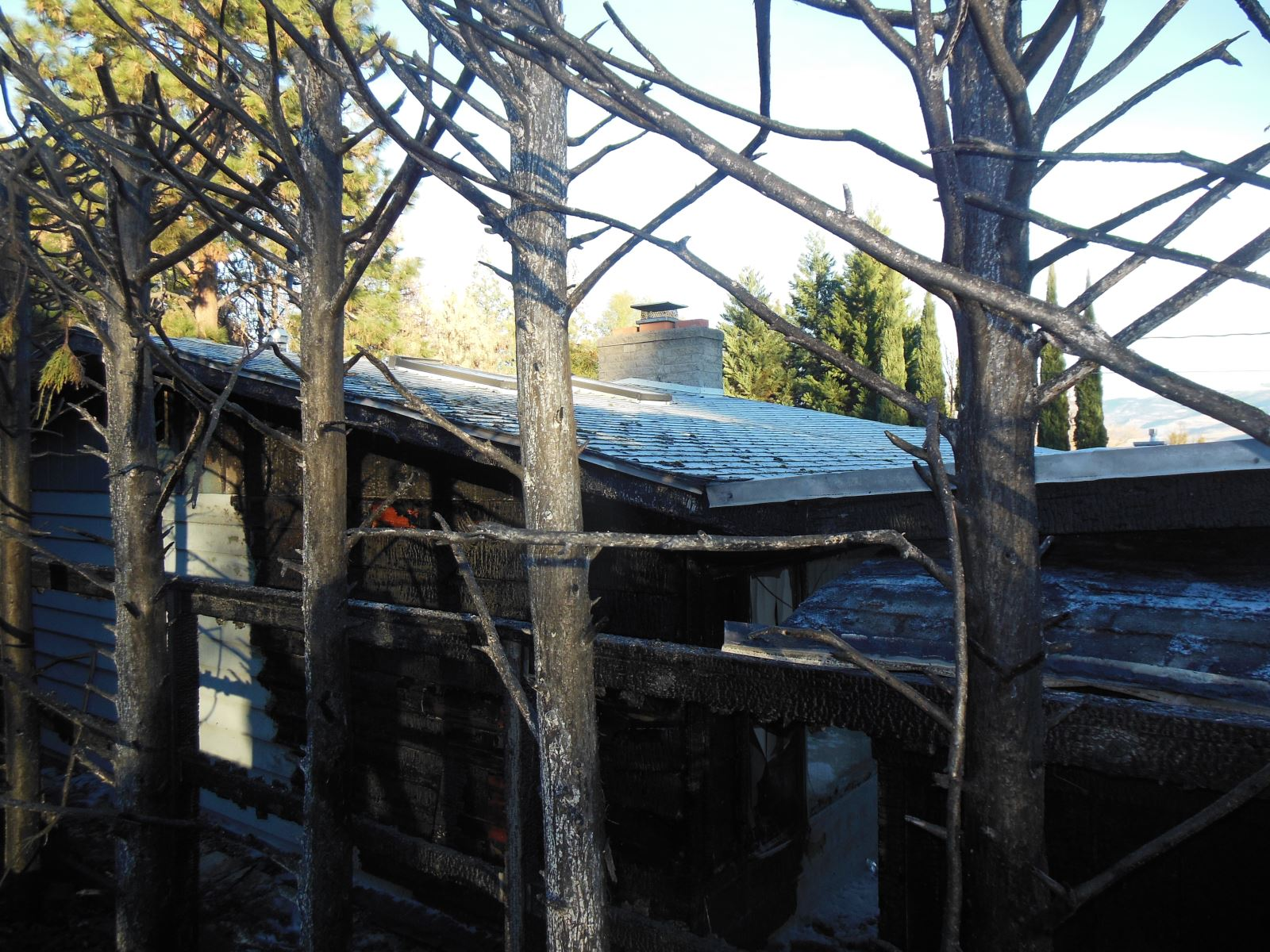 burnt arborvitae screen and home