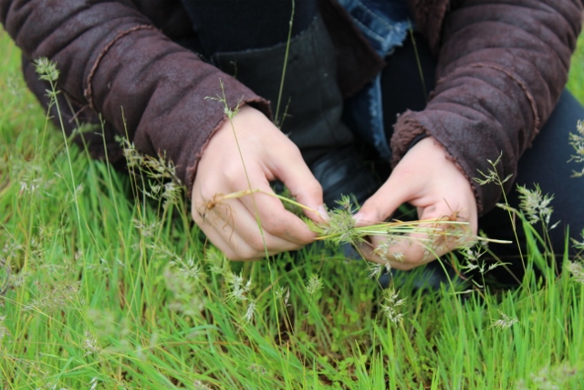 Hands with Grass
