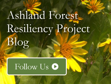 M Ashland Forest Resiliency Project Blog