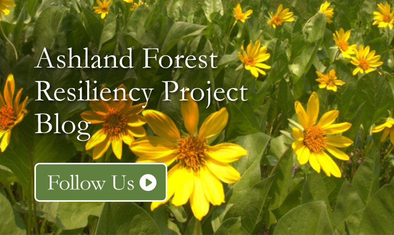 Ashland Forest Resiliency Project Blog