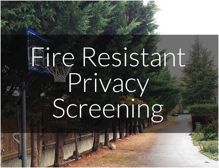 Privacy Screening Options