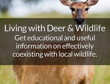 Living with Deer & Wildlife
